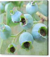 Blueberries Canvas Print