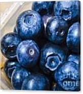 Blueberries Punnet Canvas Print