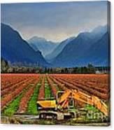 Blueberry Field Excavator Canvas Print