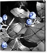 Blueberry Magic Canvas Print
