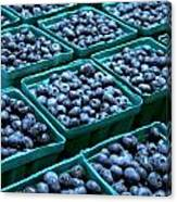 Blueberry Season In Maine Canvas Print