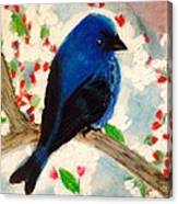 Bluebird Amid Apple Blossoms Canvas Print