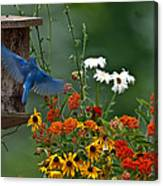 Bluebird And Colorful Flowers Canvas Print