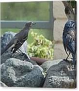 Bluejay And Mockingbird Canvas Print