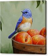 Bluebird And Peaches Greeting Card 3 Canvas Print