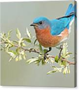 Bluebird Floral Canvas Print