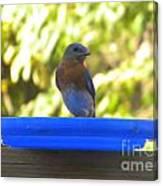 Bluebird Frisbee Canvas Print