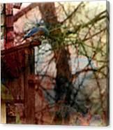 Bluebird Home Canvas Print
