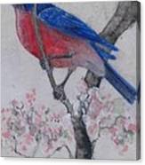 Bluebird In Cherry Blossoms Canvas Print