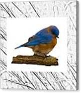 Bluebird In Prairie Frame Canvas Print