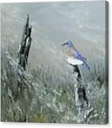 Bluebird On Post Canvas Print