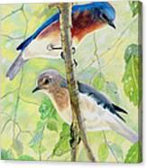 Bluebird Pair Canvas Print
