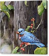 Bluebird - Red Berries Canvas Print