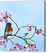 Bluebird Visits Red Dogwood Canvas Print