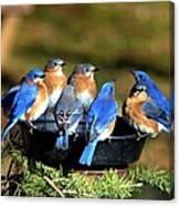Bluebird Watering Hole Canvas Print