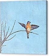 Bluebird Wings - Minimalism Canvas Print