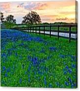 Bluebonnet Fields Forever Brenham Texas Canvas Print