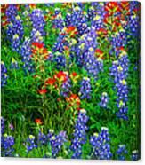 Bluebonnet Patch Canvas Print