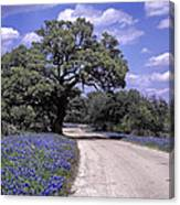 Bluebonnet Road Canvas Print