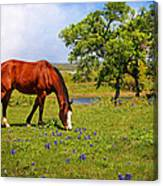 Bluebonnet Trail Delight Canvas Print