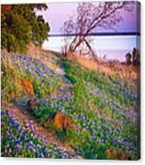 Bluebonnet Trail Canvas Print
