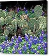 Bluebonnets And Cacti Canvas Print
