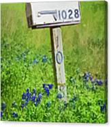 Bluebonnets And Mailbox Canvas Print
