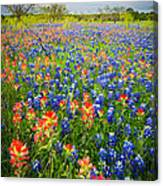Bluebonnets And Prarie Fire Canvas Print