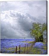 Bluebonnets And Spring Rain Canvas Print
