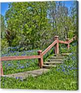 Bluebonnets And Stairs Canvas Print
