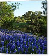 Bluebonnets By The Pond Canvas Print