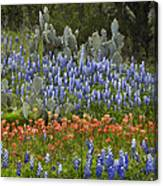 Bluebonnets Paintbrush And Prickly Pear Canvas Print