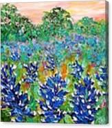 Bluebonnets Sunrise Canvas Print
