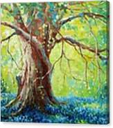 Bluebonnets Under The Oak Canvas Print