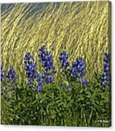 Bluebonnets With Ladybug Canvas Print