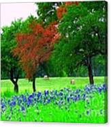 Bluebonnets With Red Flourish  Canvas Print