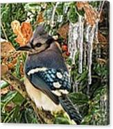 Bluejay And Ice Canvas Print