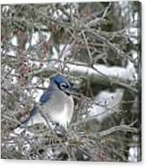 Bluejay In Crabtree Canvas Print