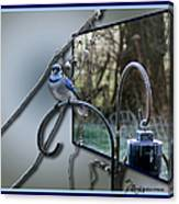 Bluejay Oob - Featured In 'out Of Frame' And Comfortable Art Groups Canvas Print
