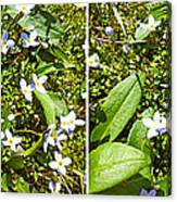 Bluets In Stereo Canvas Print