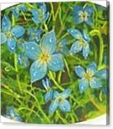 Bluets Of The Shenandoah  Canvas Print