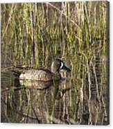 Bluewing Teal Canvas Print