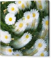 Blurred Daisies Canvas Print
