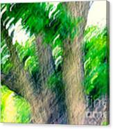 Blurred Pecan Canvas Print
