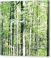 Blurred Trees Spring-1 Canvas Print