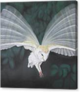 Blurred Wings Canvas Print