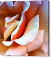 Blush Pink Palm Springs Canvas Print