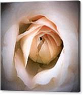 Blushing Beauty  Canvas Print