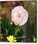 Blushing In Pink Canvas Print