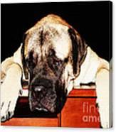 Mastiff Art By Sharon Cummings Canvas Print